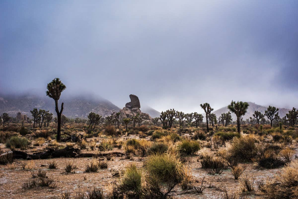 Fog settling on Joshua Tree National Park