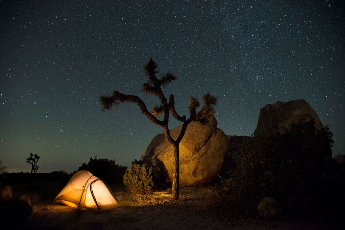 A small dome tent with light on next to a Joshua tree with a stary night sky in the background.