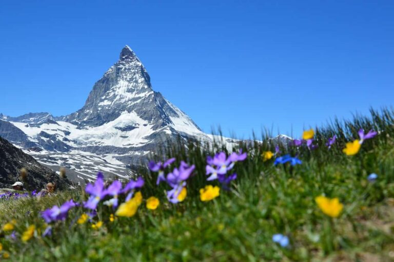 Looking up at the Matterhorn in the Swiss Alps with wildflowers in the foreground.