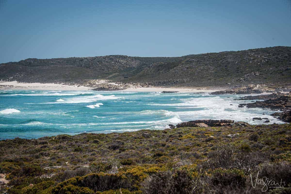Cape Point Nature park is an easy day trip from Cape Town and a nature lovers delight with loads of interesting hikes and coastal region to explore.