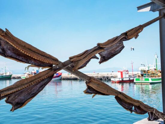 Fish drying in the sun in Kalk Bay to make a type of fish Biltong.