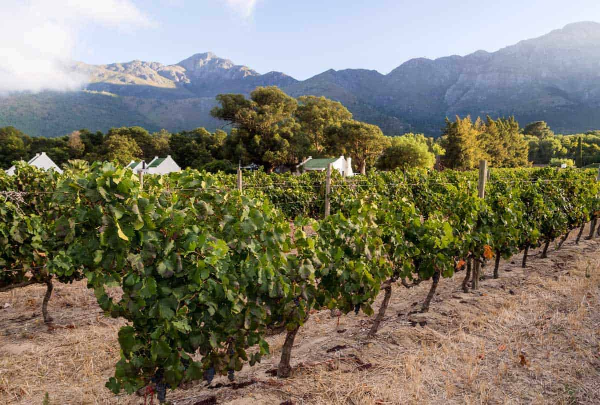 Day trip to Franschhoek, South Africa's most celebrated wineries.