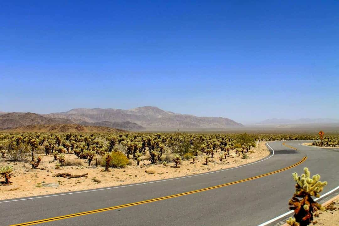 Looking down the highway in Joshua Tree on a day trip to Joshua Tree NP