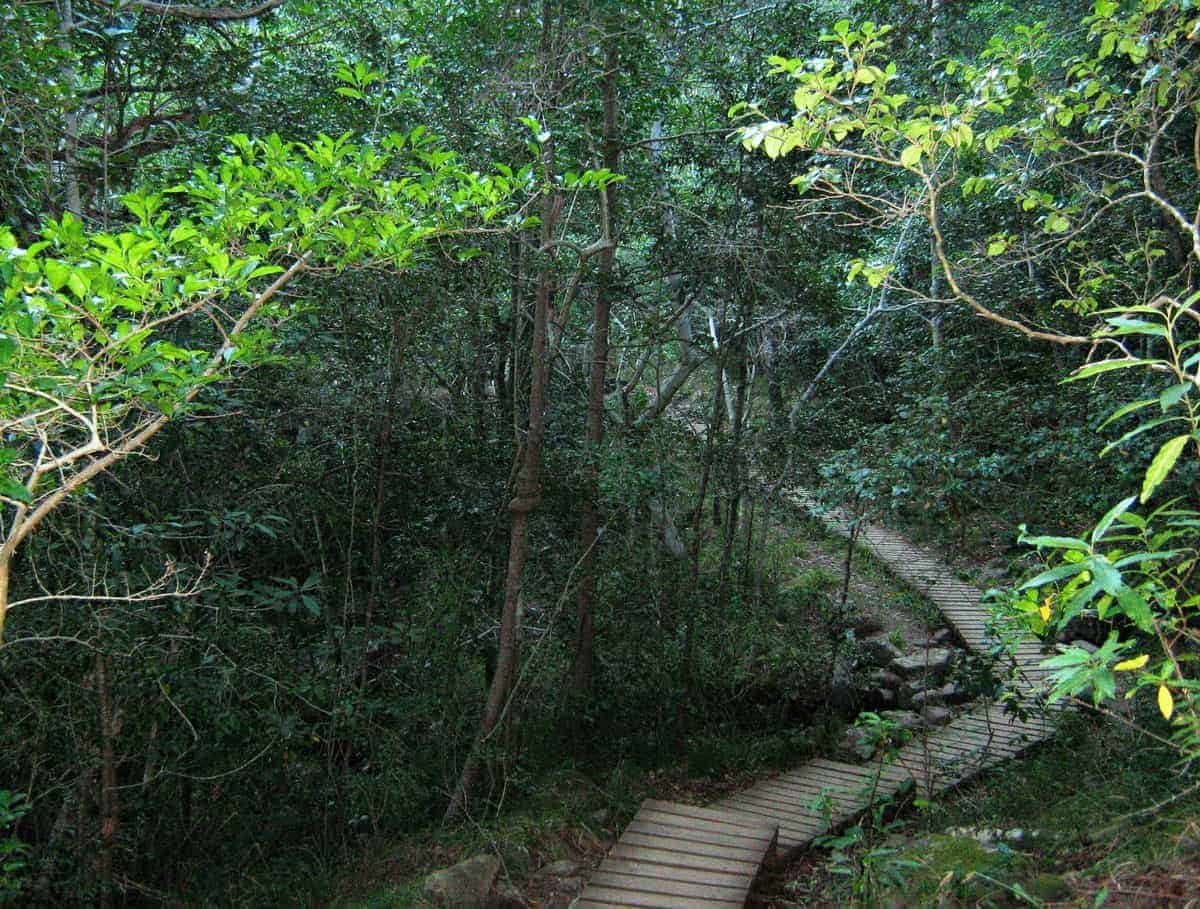 Newlands Forest offers hikes through indigenous forest.