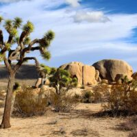 The Perfect Joshua Tree Day Trip from Los Angeles