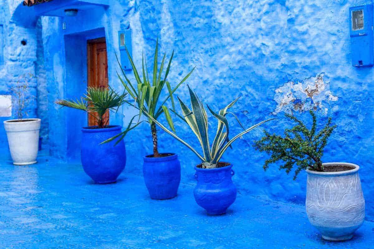Blue tiles, blue pots, blue walls this is Chefchaouen.