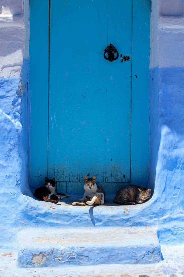 3 cats sitting in front of blue door in Chefchaouen.