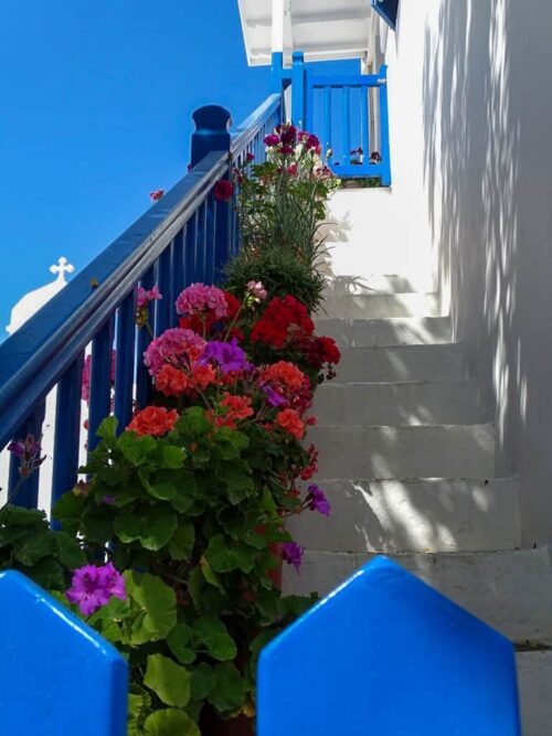 Flowers and blue railings on whitewashed steps, simply Mykonos.