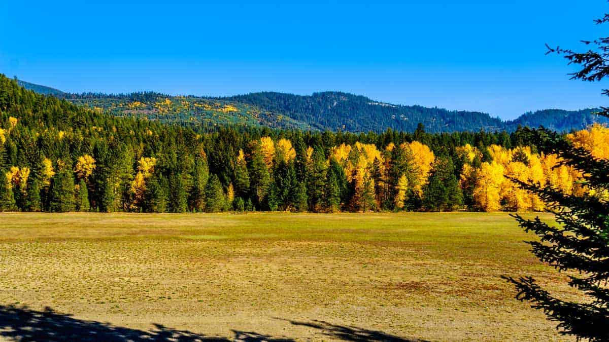 Golden fields flanked by forest in fall colours of gold and green.