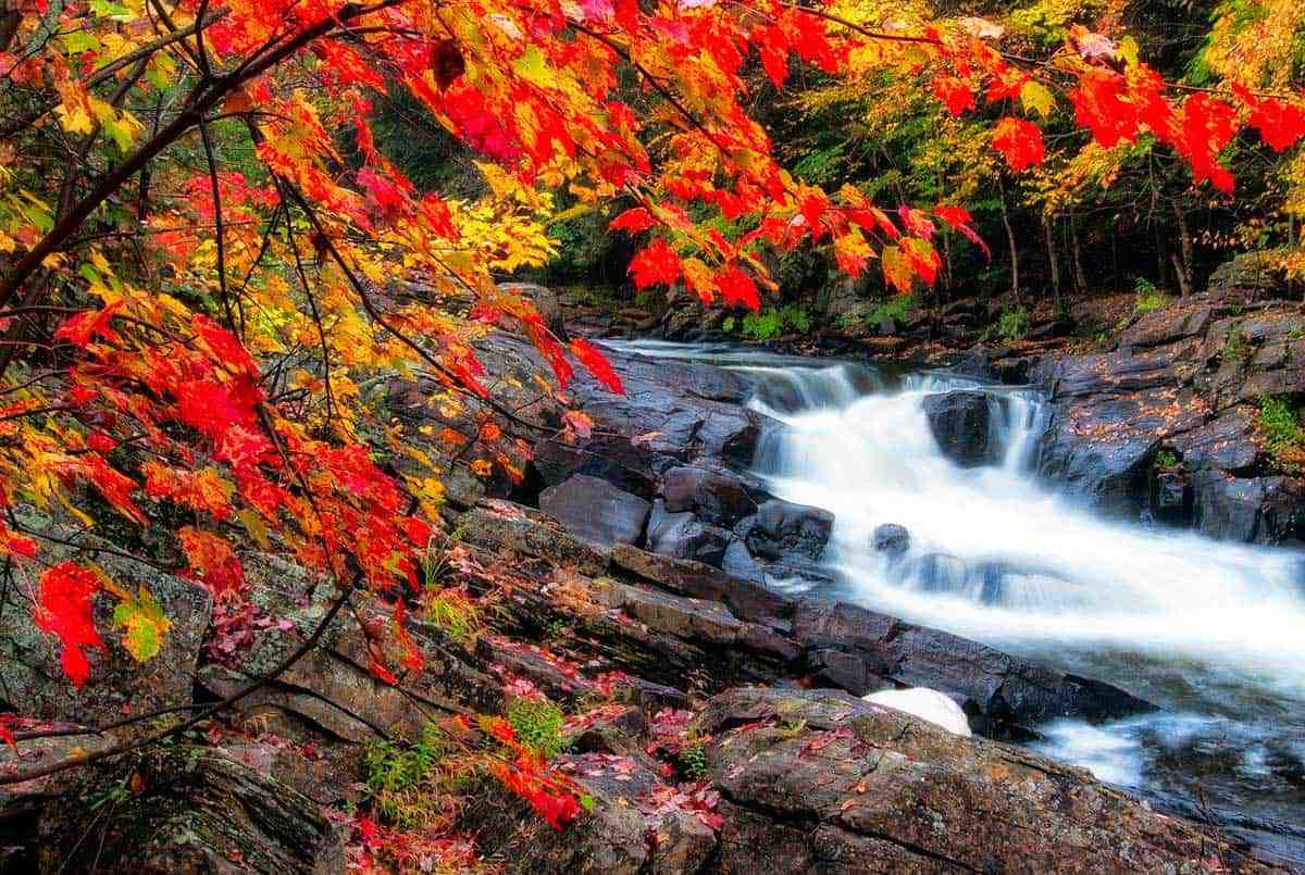 Cascading creek and red/gold foliage surrounds you in fall in Algonquin Park.