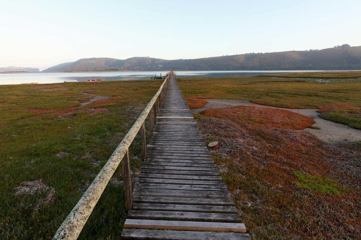 Wooden walkway across wetlands to Knysna Lagoon.