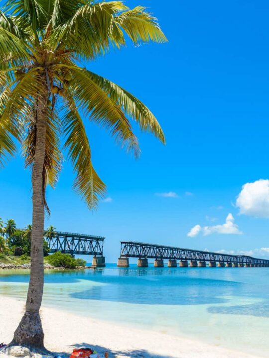 Image: Tropical beach with palm tree in the foreground and broken railbridge in the background - Bahia Honda State Park Florida Keys