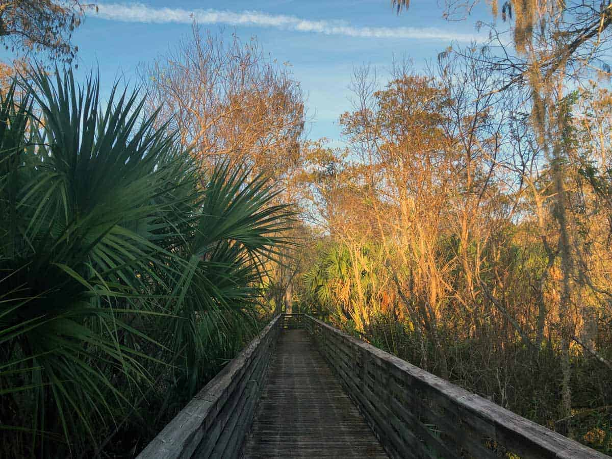 Bosrdwalk through the nature reserve in Frenchman's Forest Florida.