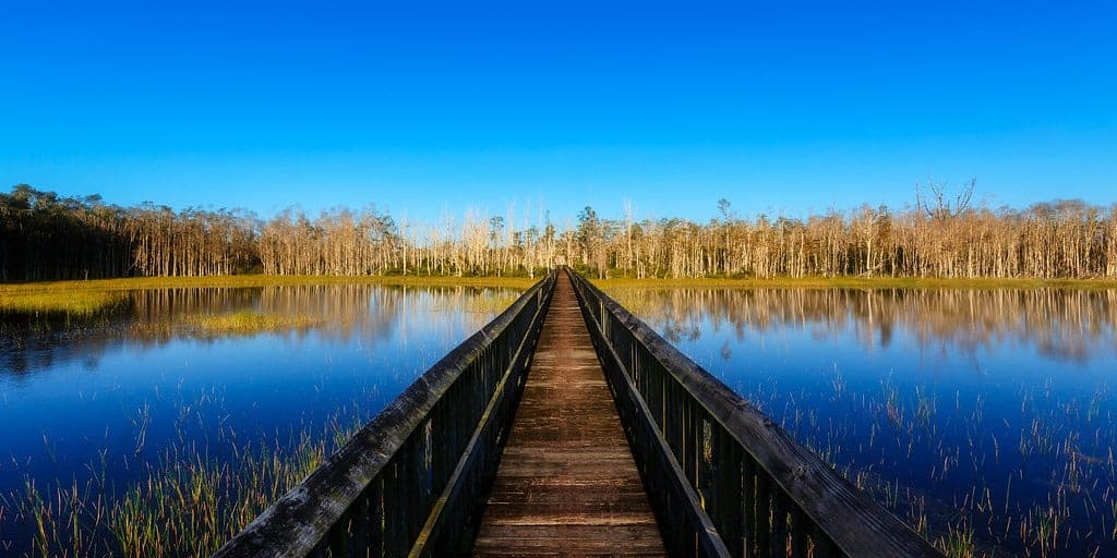 Grassy Waters Preserve boardwalk over wetlands.