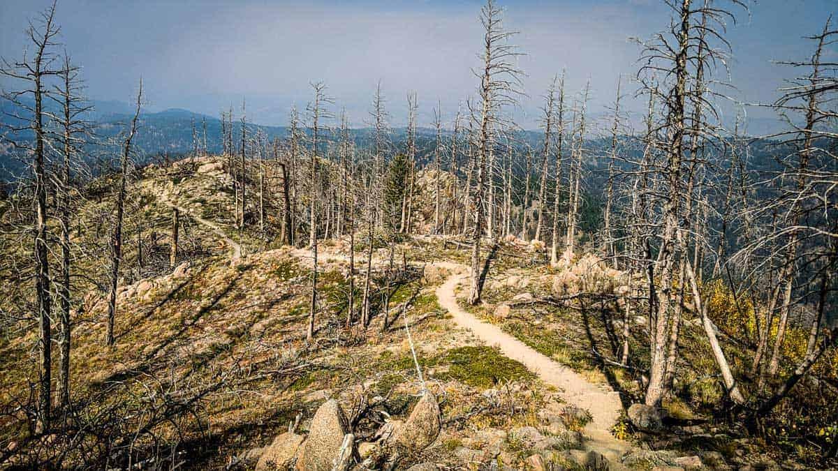 Bear Peak mountain hiking trail through bare trees in Boulder Colorado.