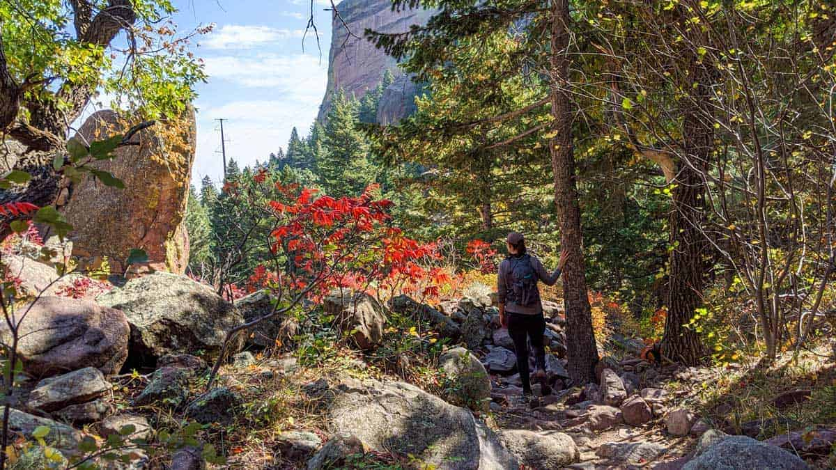 Lady hiking past bright red flowering trees in the mountain of the Bear Peak Hiking Trail Boulder Colorado.