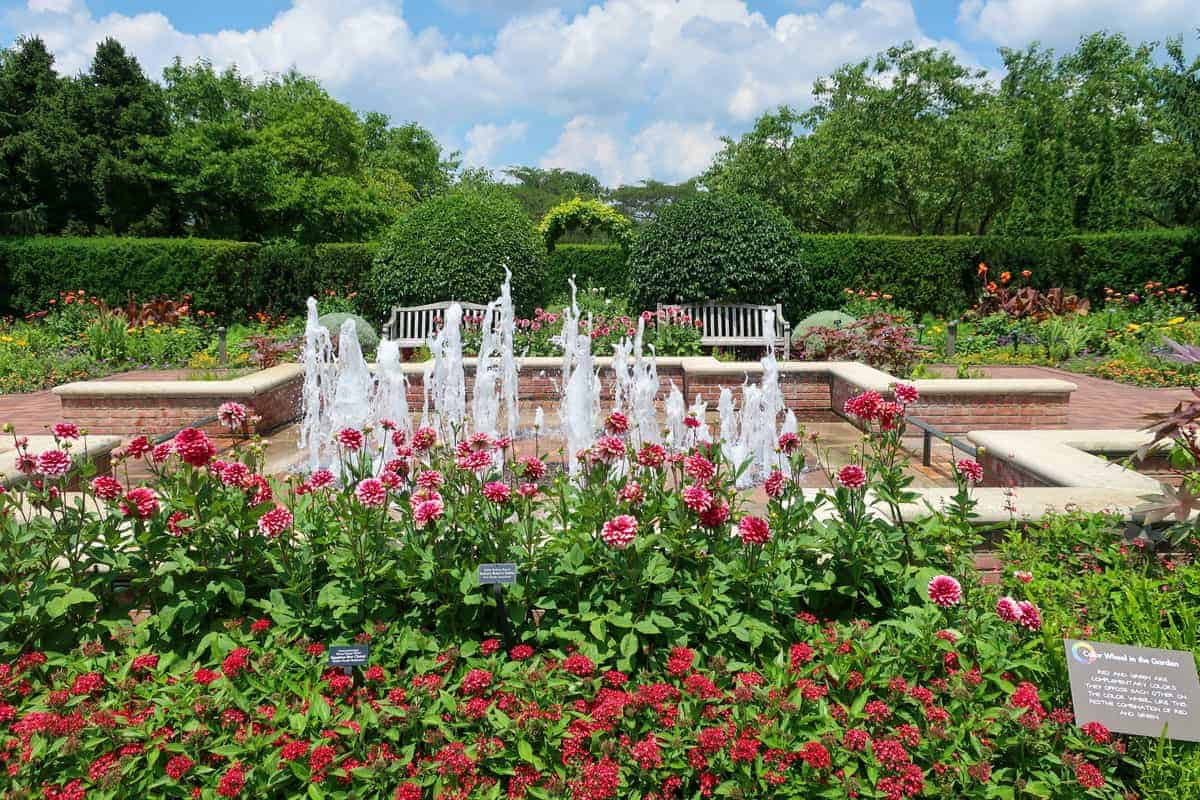 Red flowers with fountain in the background in Chicago Botanic Gardens.