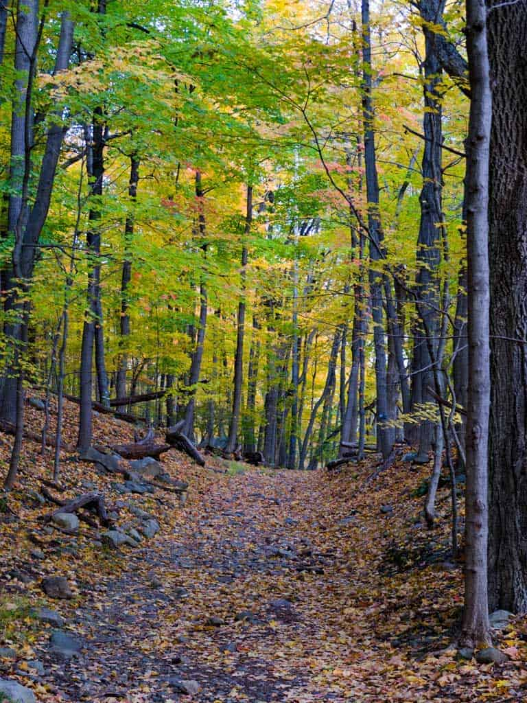 Hiking trail through trees in fall at Breakneck ridge Hudson Valley.