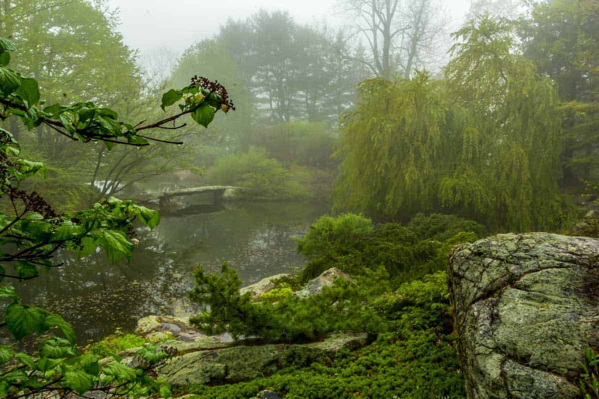 Foggy view over a a lake in lush green gardens.