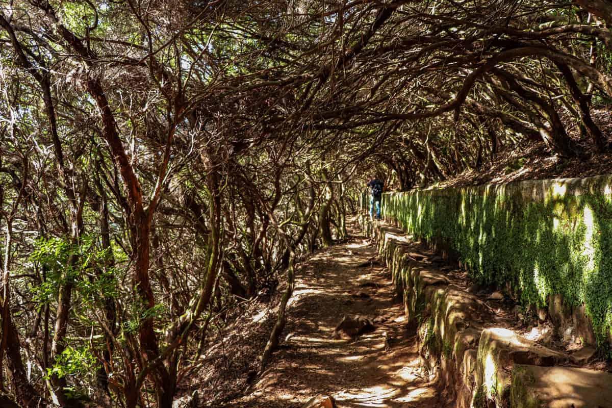 Walking trail through intricate vines.