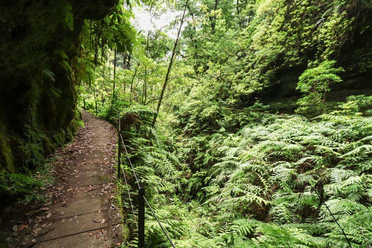 Hiking trail on Madeira Island through fern landscape.