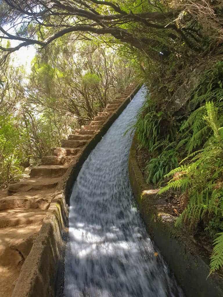Water running down the Madeira levadas through fern forest.