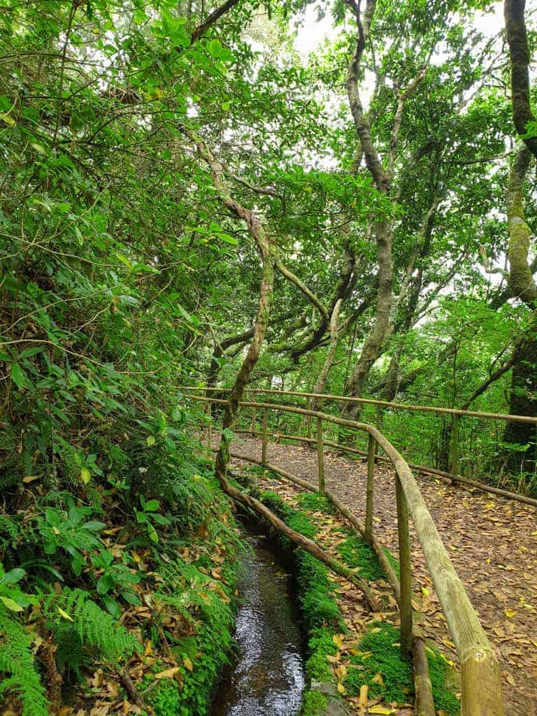 Walking trails along the levadas on Madeira Island.