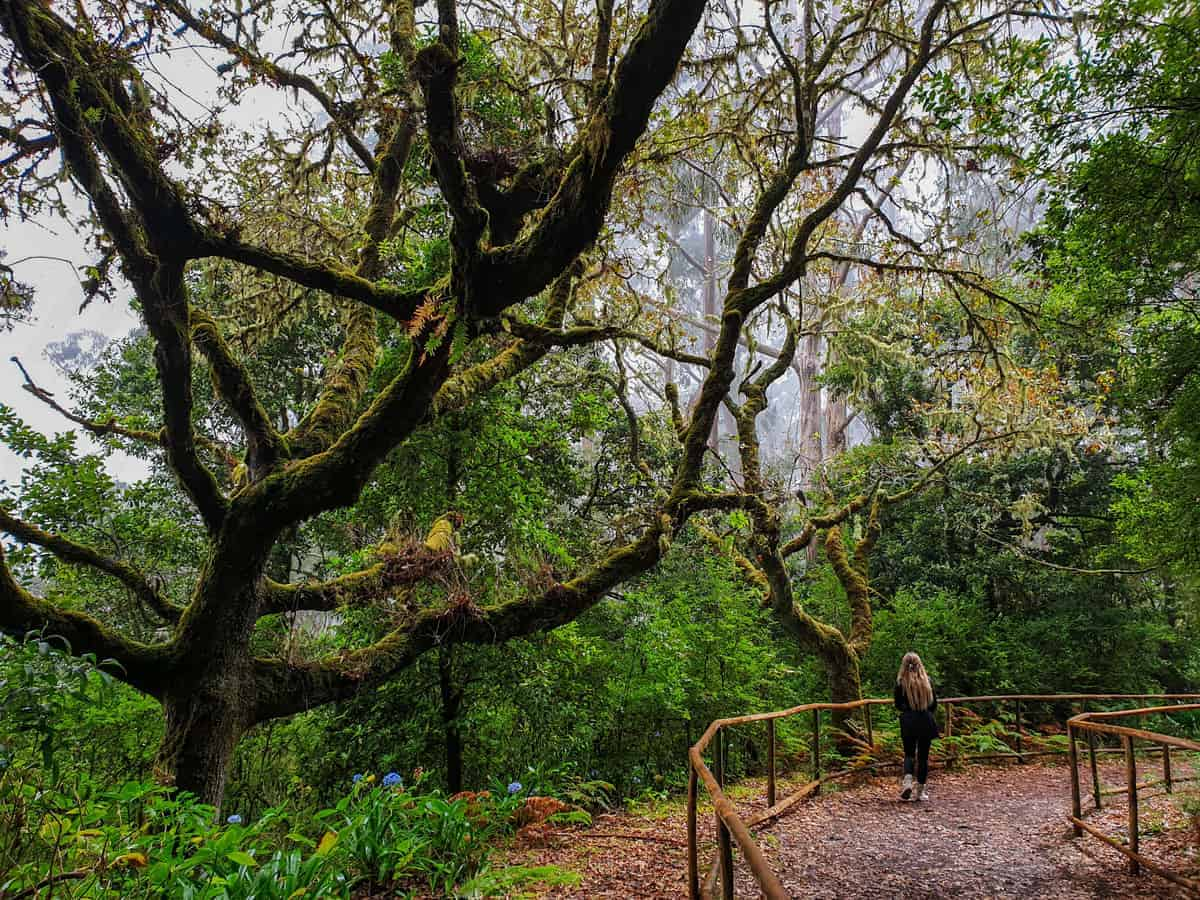 Girl standing in enchanted looking forest on Madeira island.