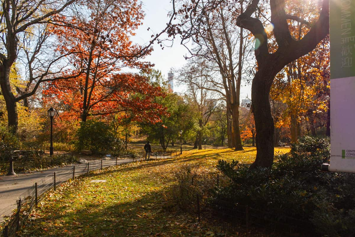 Fall colors in central Park New York.