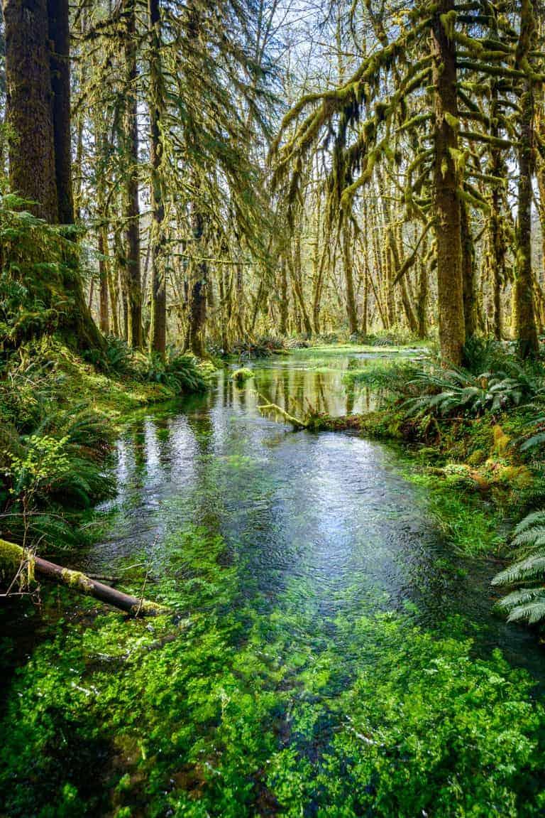 Clear stream running through lush rainforest.