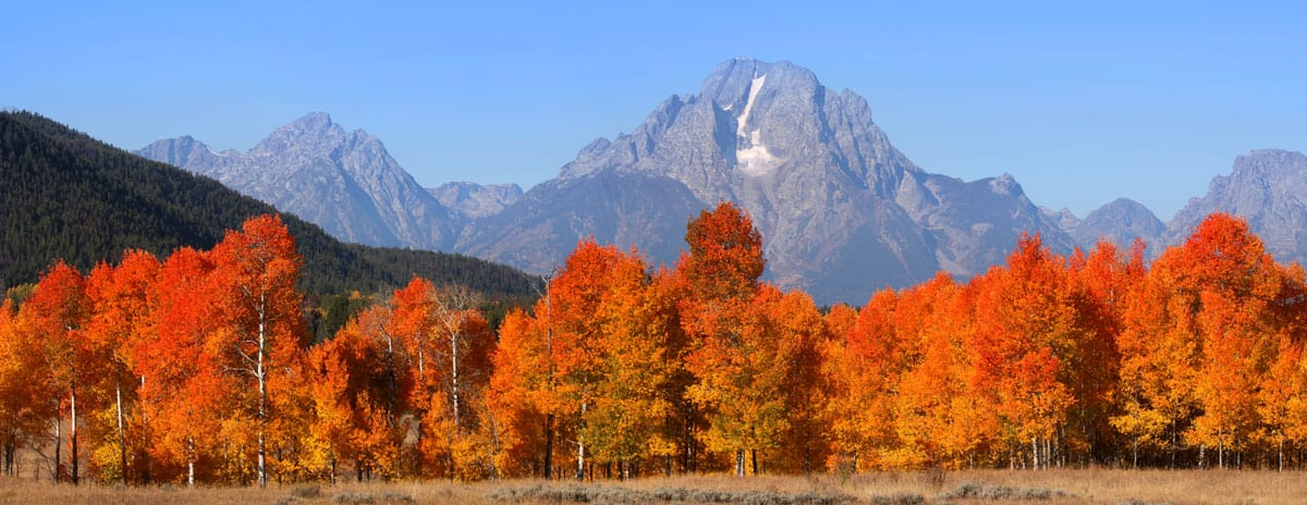Grand Tetons national mountain range with fall coloured trees.