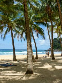 Looking through the palm trees onto the beach in Phuket Thailand.