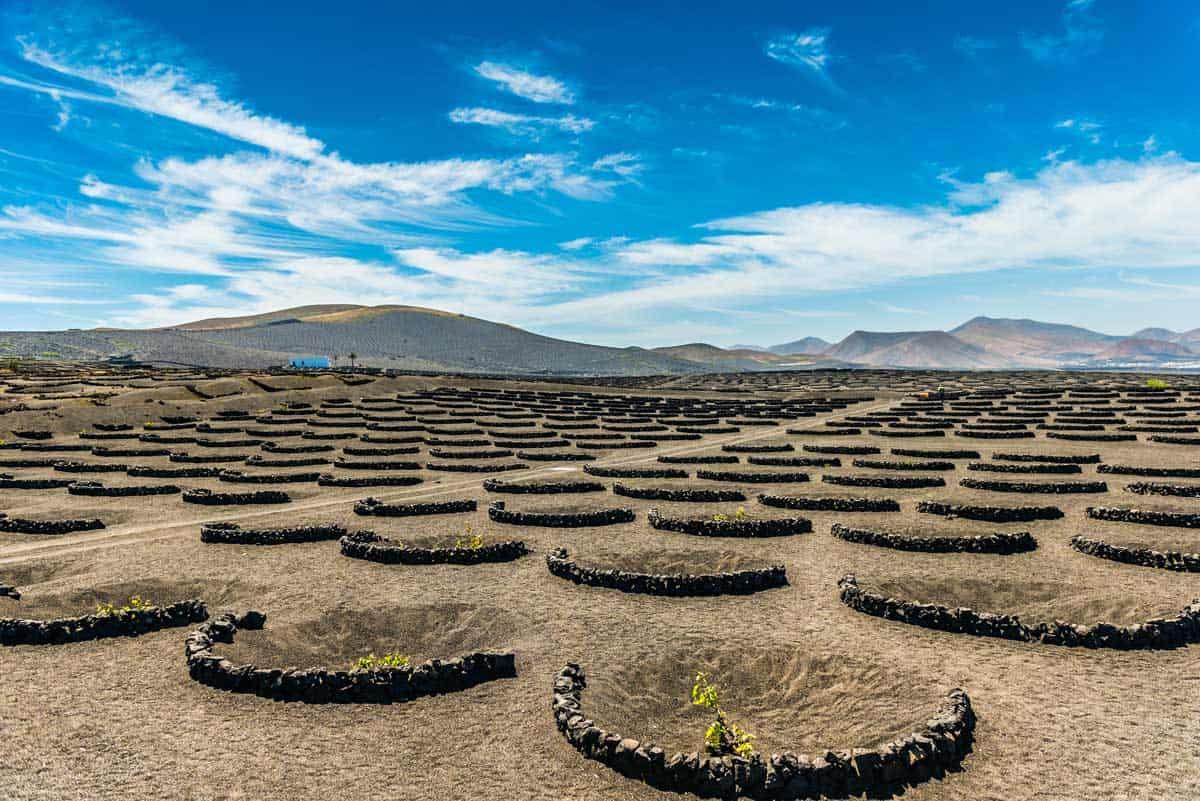 Unusual volcanic vineyard in Lanzarote Island in Spain.
