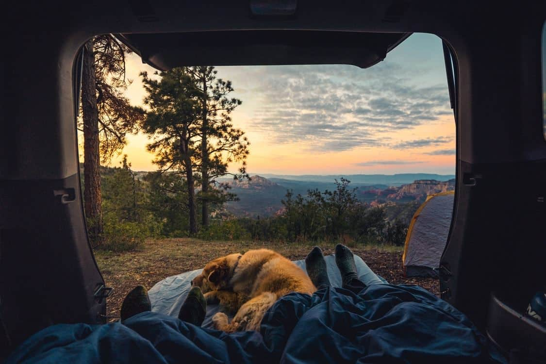 Camping with a dog watching sunrise from the tent