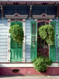 Hanging plants in front of French style New Orleans houses.