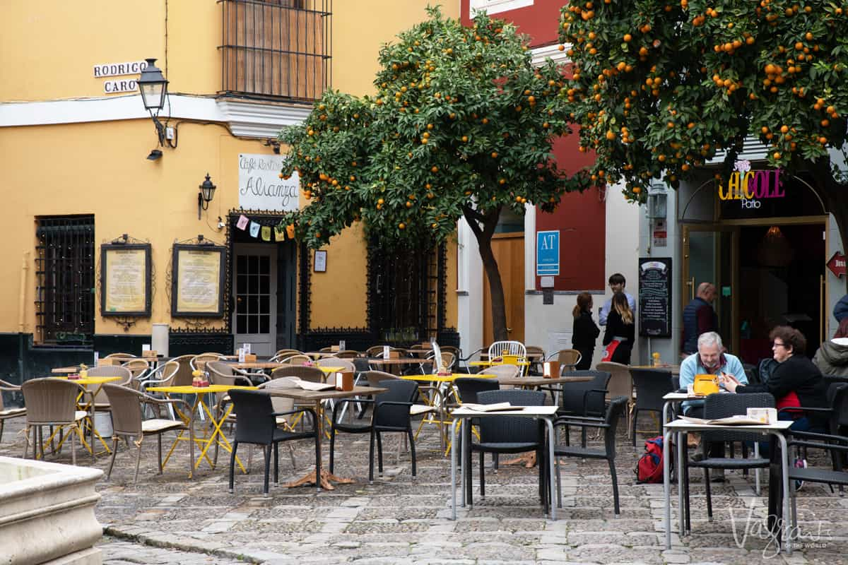 Outdoor cafe in Seville with tables under the orange trees.