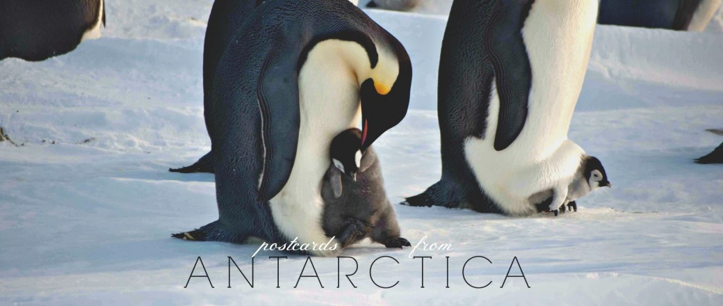 You Can Send A Postcard From Antarctica Once A Year!