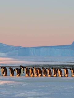 What is it like to live in Antarctica