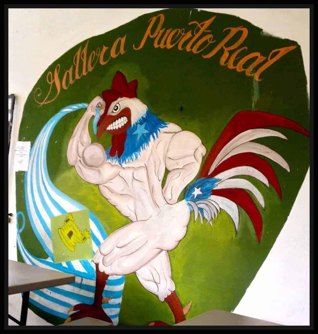 Puerto Rico Cock 79