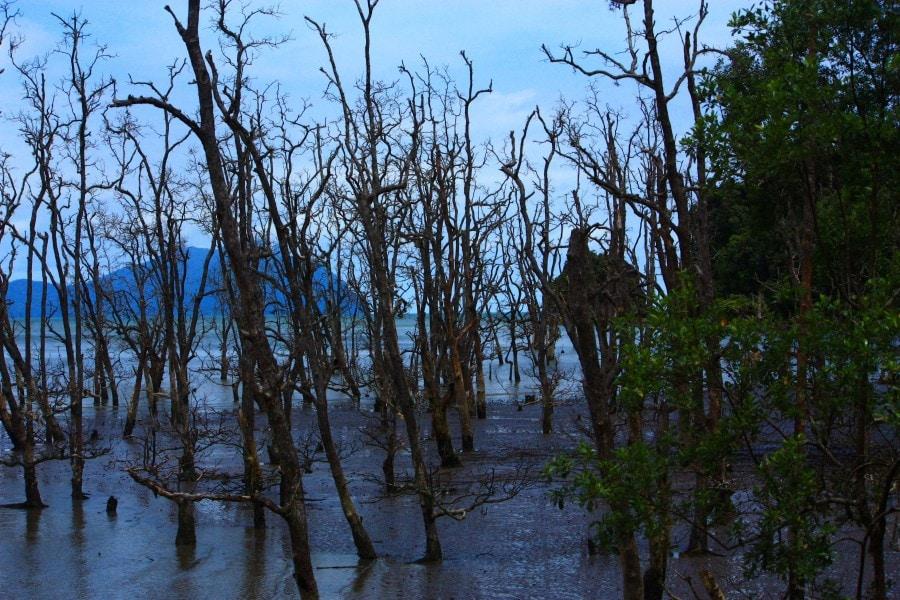 Mangroves- Bako National Park, Borneo