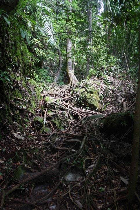 Bako National Park, Borneo